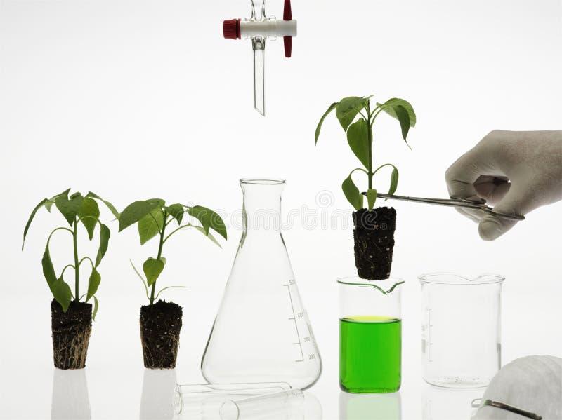 koncepcja biotechnologii zdjęcie stock
