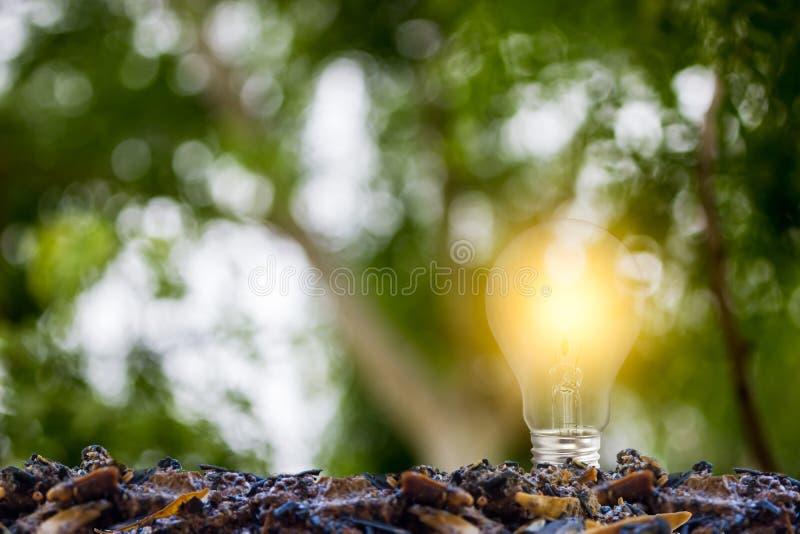 koncepcja ekologii obraz?w wi?cej mojego portfolio Narastająca żarówka na dobrej ziemi z zielonym natury tłem Przedstawia podtrzy obrazy stock