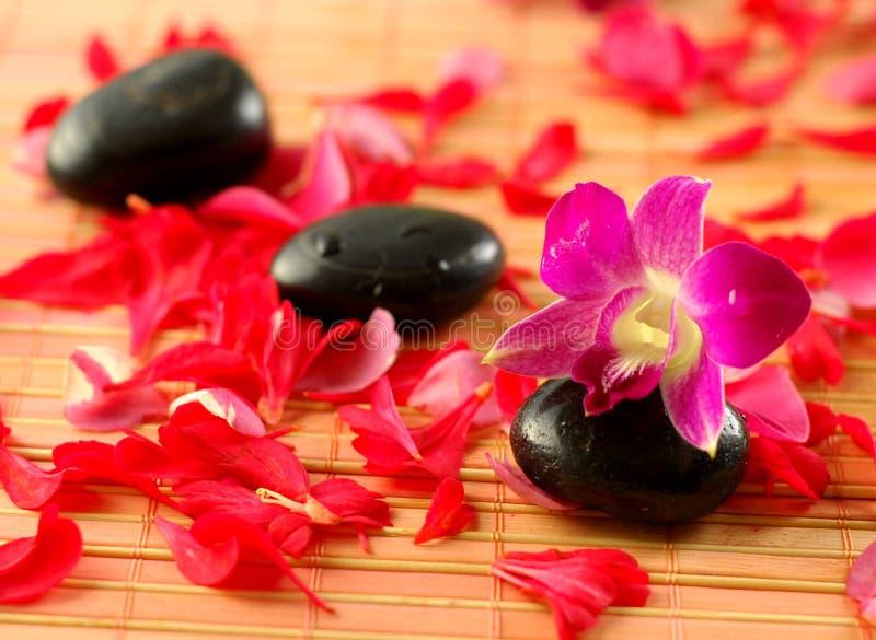 koncepcja wellness w spa. fotografia royalty free