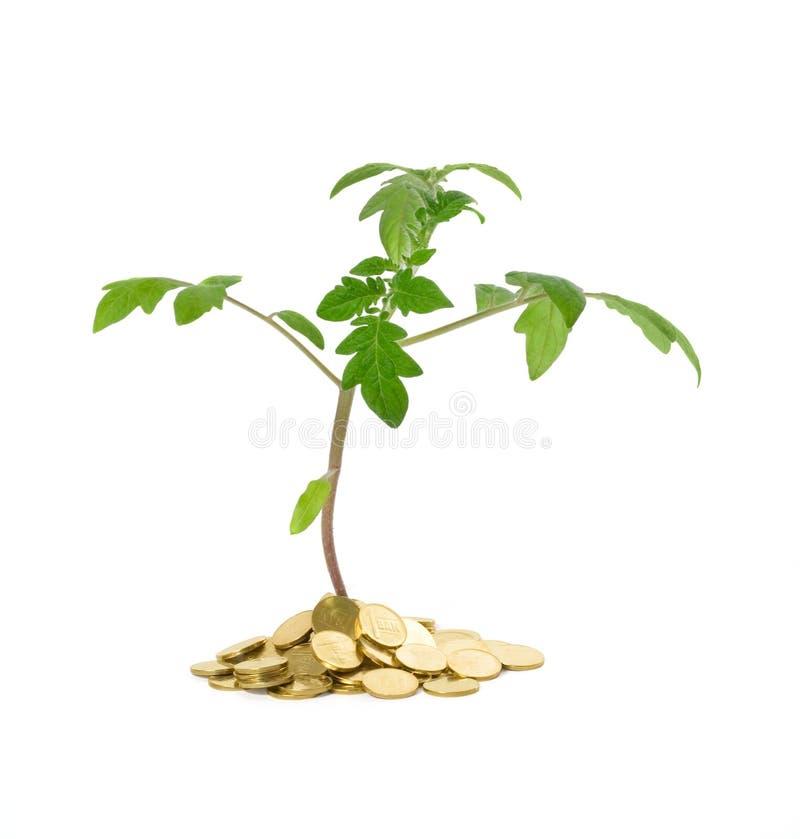 koncepcja wzrostu interes obrazy royalty free