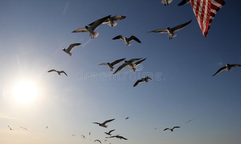 Konceptualny patriotyczny wizerunek seagulls i flaga amerykańska obraz royalty free