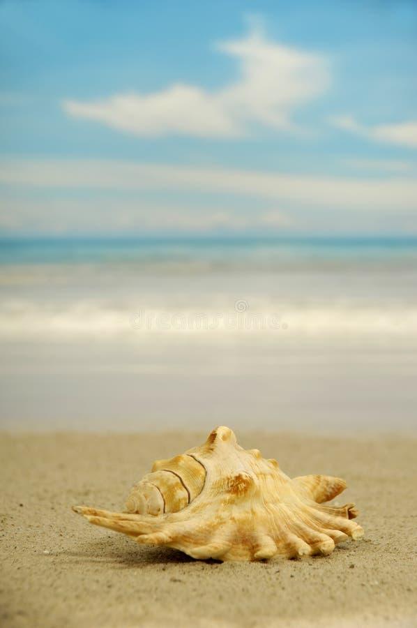 koncha plażowa obrazy stock