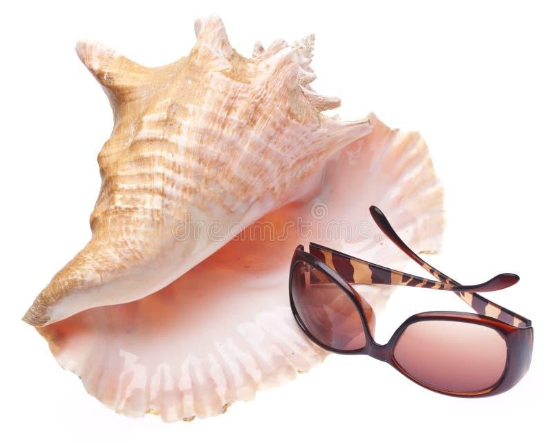 konchy skorupy okulary przeciwsłoneczne obraz royalty free