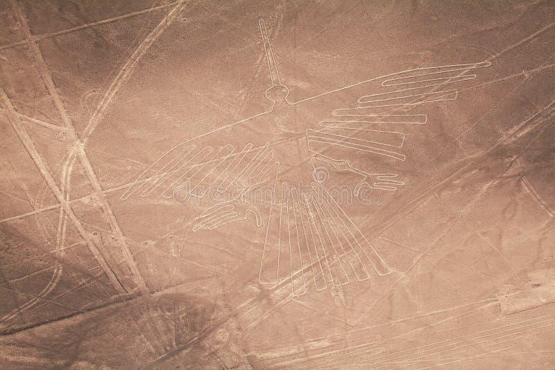 kondor stockbild