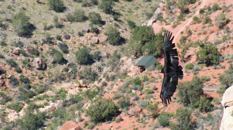 kondor jasny anioł obraz stock