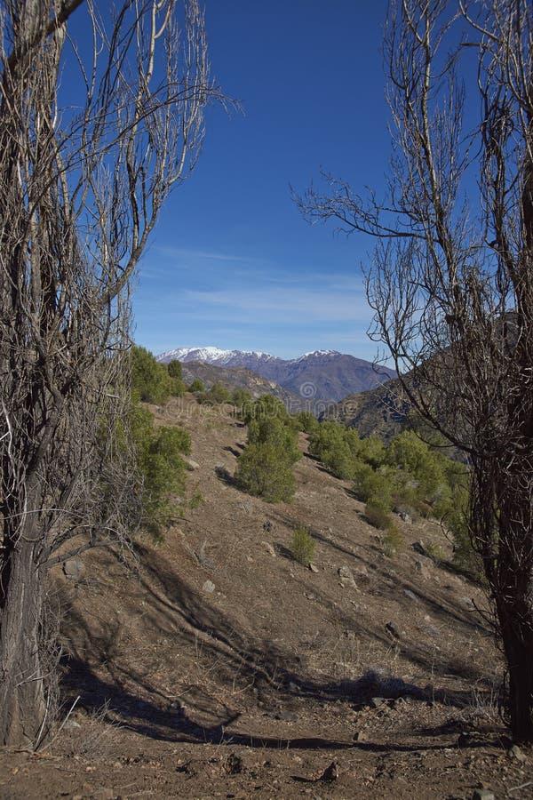 Kondor-Spur in Orten Parque Yerba, Chile lizenzfreies stockfoto