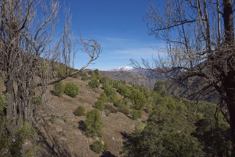 Kondor-Spur in Orten Parque Yerba, Chile lizenzfreie stockfotos