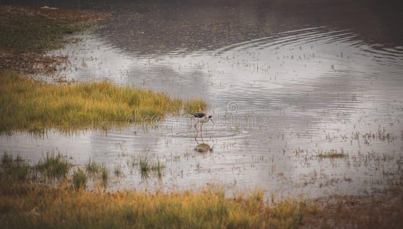 A lonely bird. A konely. Bird, lake, green, grass, travel, light, beak, lawn, swamp, sun, sunrise, outdoor, morning, wetland, flight, environment, early royalty free stock photography