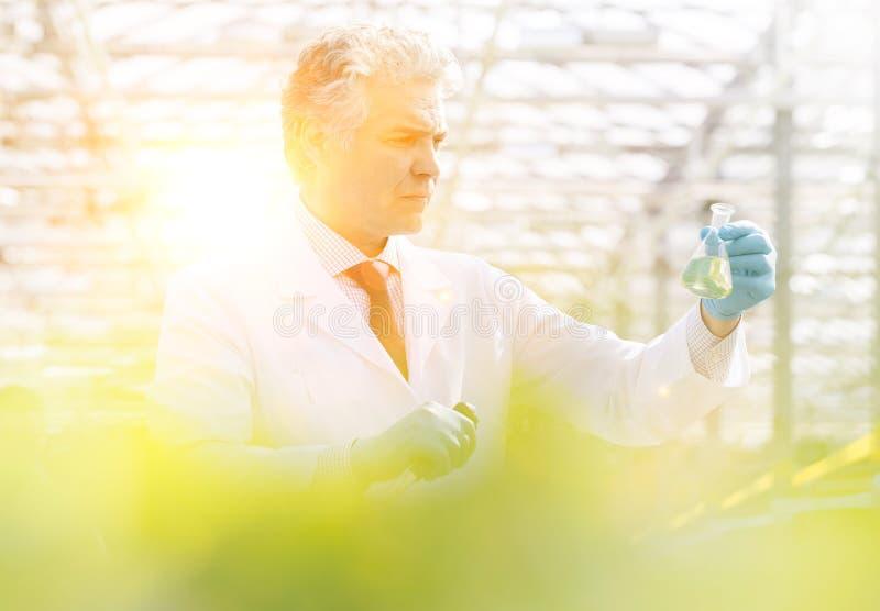 Konfidenzreife männliche Biochemikalien, die während des Auftretens im Gewächshaus konische Erlenmeyerkolben untersuchen lizenzfreie stockfotos