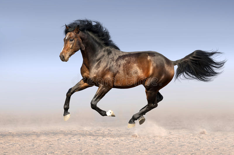 Konia bieg cwał zdjęcie royalty free