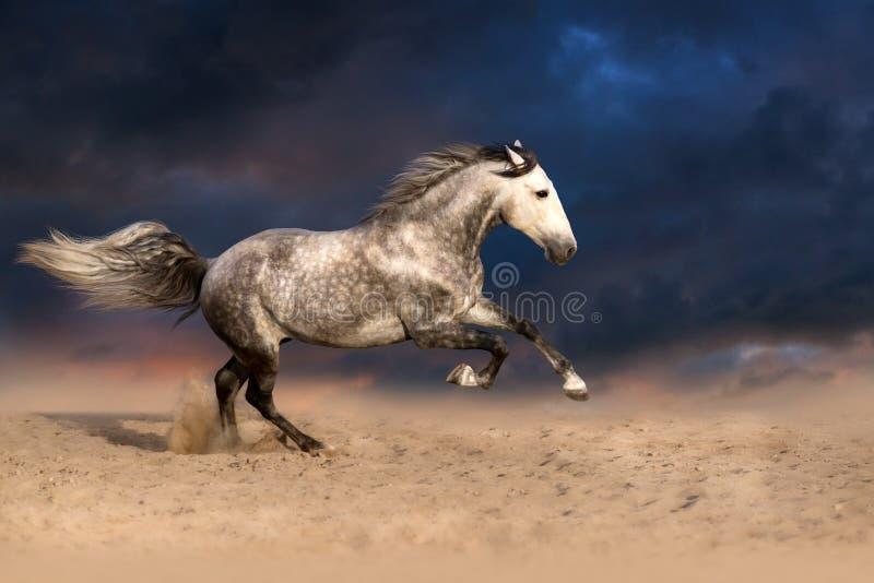 Konia bieg cwał przy zmierzchem obrazy royalty free