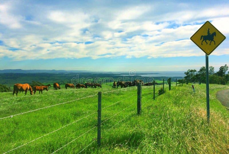 Konia gospodarstwo rolne fotografia royalty free