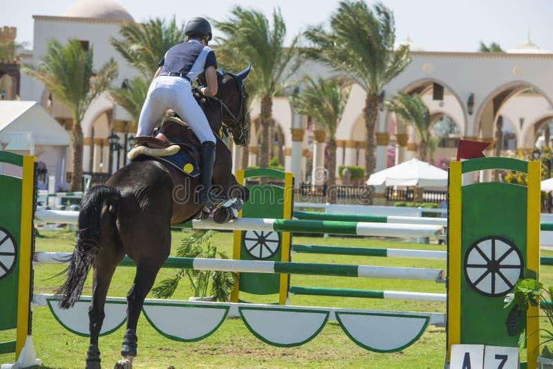 Konia i jeźdza doskakiwanie w equestrian rywalizaci fotografia royalty free