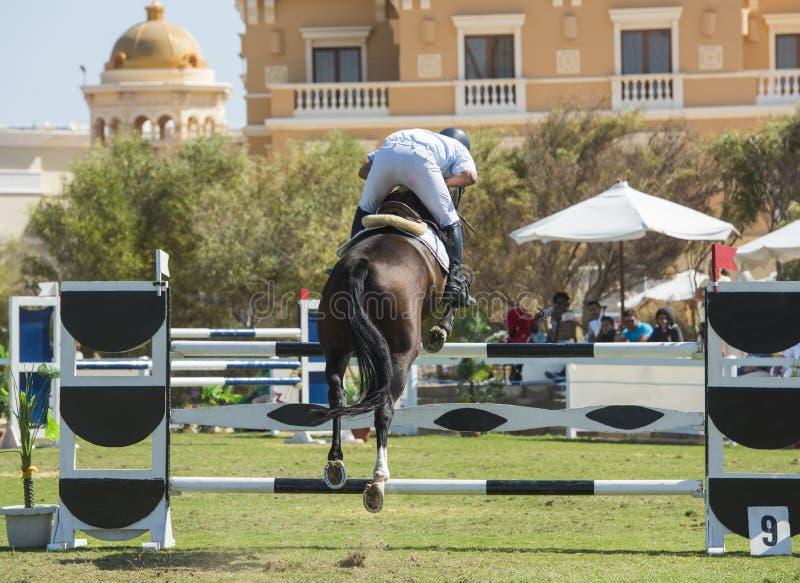 Konia i jeźdza doskakiwanie w equestrian rywalizaci obraz stock