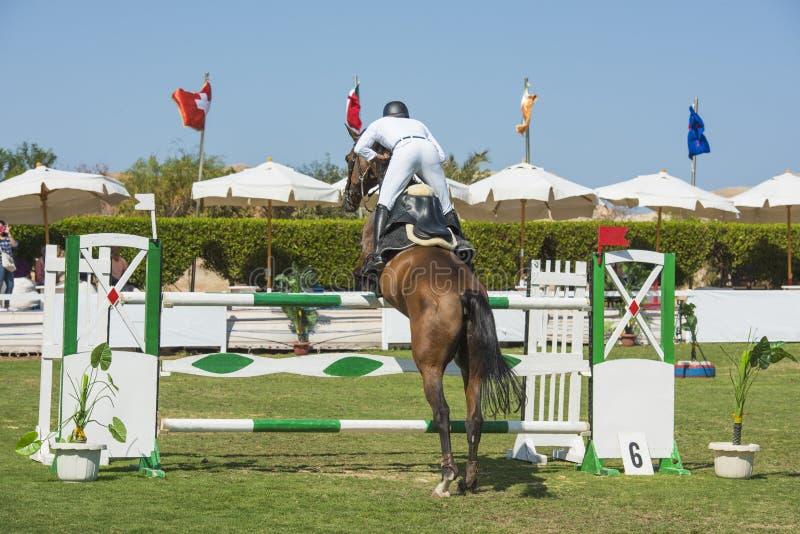Konia i jeźdza doskakiwanie w equestrian rywalizaci zdjęcie stock