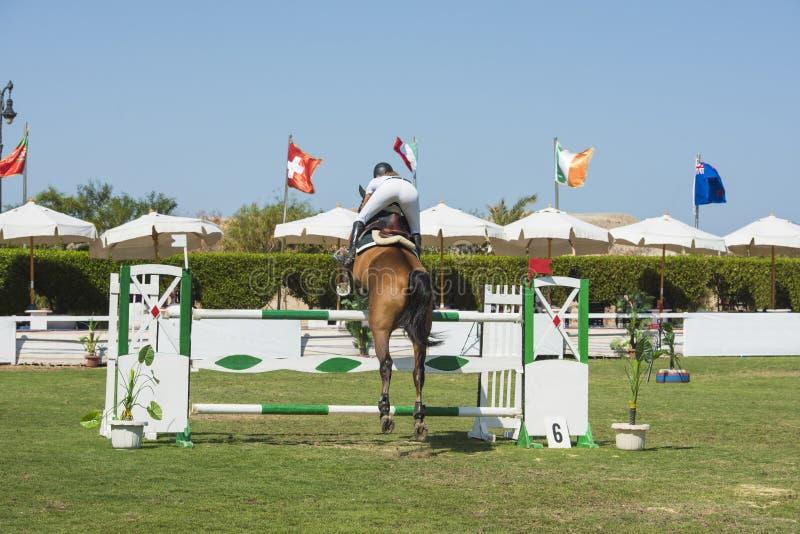 Konia i jeźdza doskakiwanie w equestrian rywalizaci zdjęcia royalty free