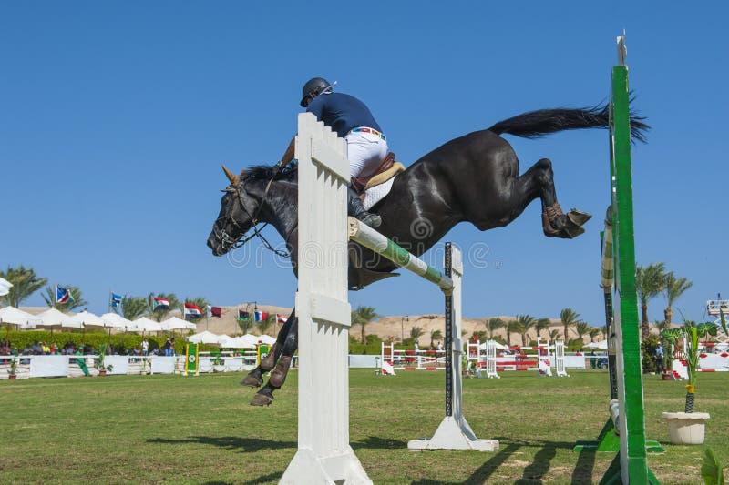 Konia i jeźdza doskakiwanie w equestrian rywalizaci obrazy stock