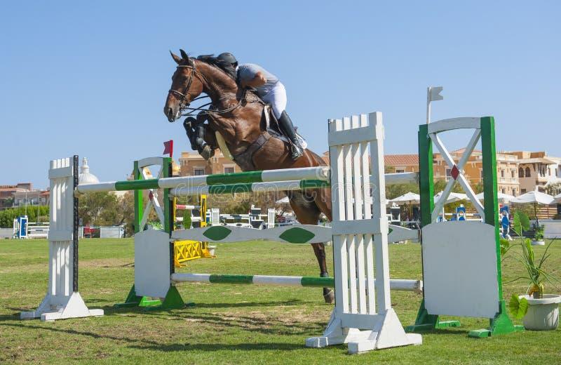 Konia i jeźdza doskakiwanie w equestrian rywalizaci obraz royalty free