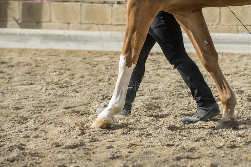 Konia i mężczyzna związek fotografia royalty free