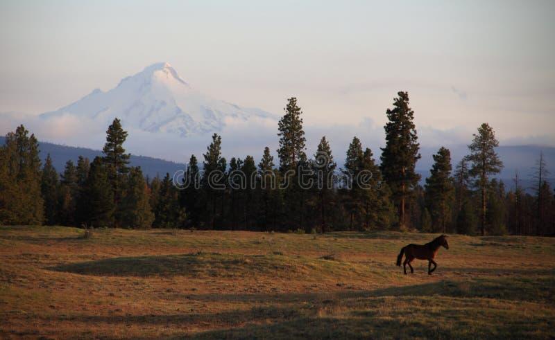 Konia i Oregon góry sceneria fotografia royalty free