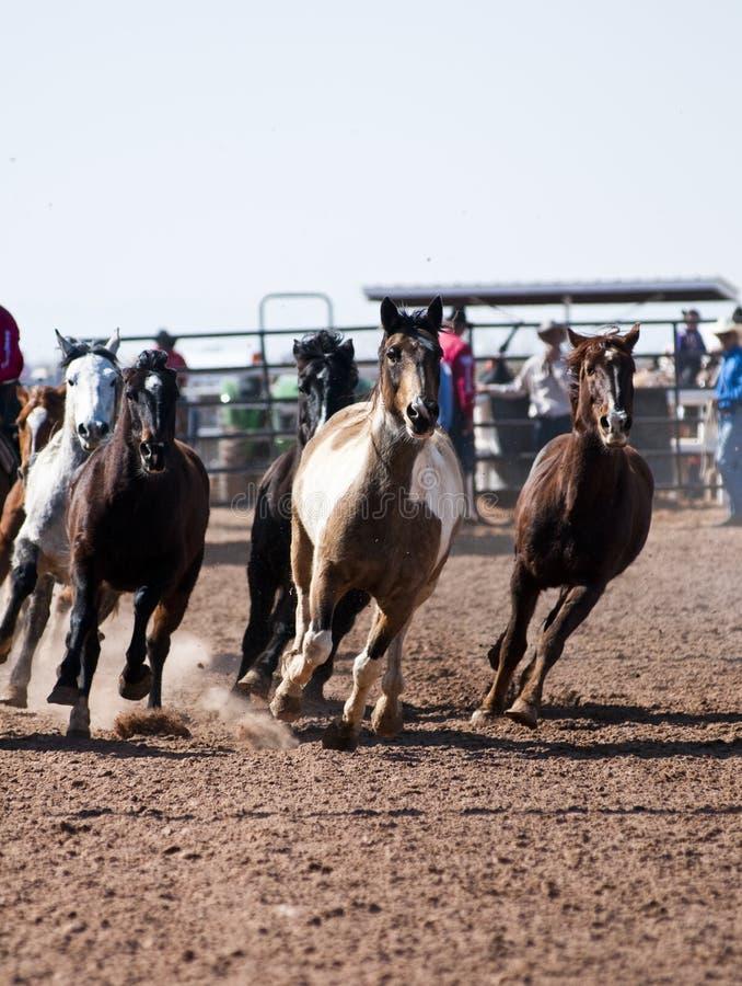 konia rodeo zdjęcie stock