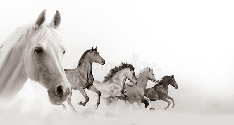 Konia sztandar z biel przestrzenią fotografia stock