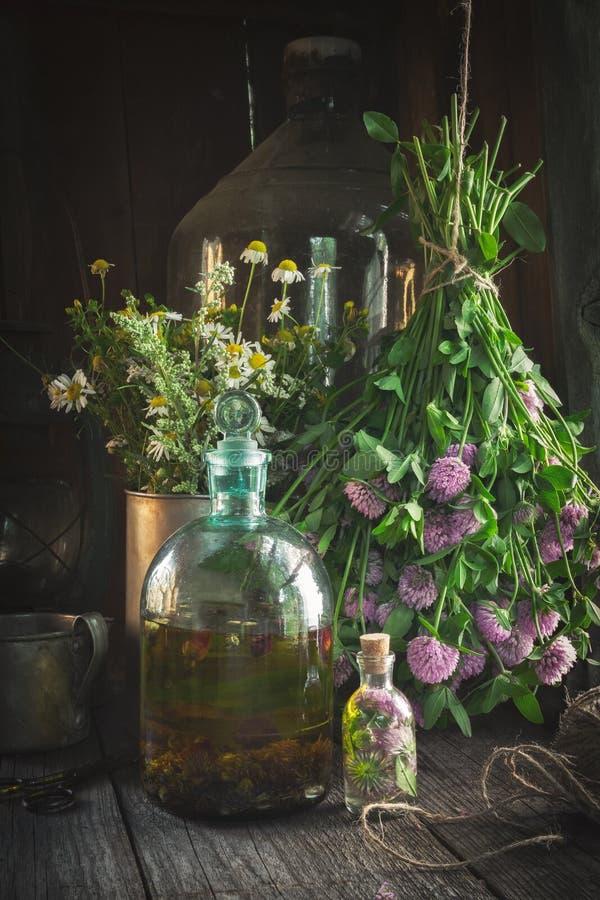 Koniczynowy tincture, infuzja, istotna nafciana butelka lub lecznicze ziele wiązki, fotografia stock