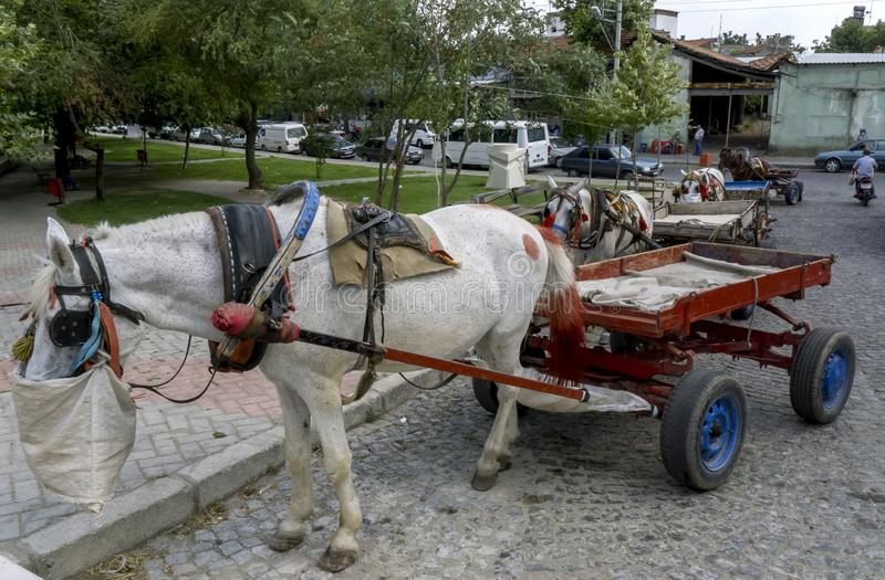 Konie żywią się ulicą w Bergamie w Turcji obraz royalty free