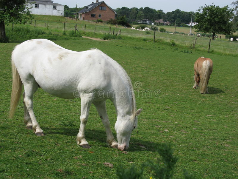konie zdjęcia stock