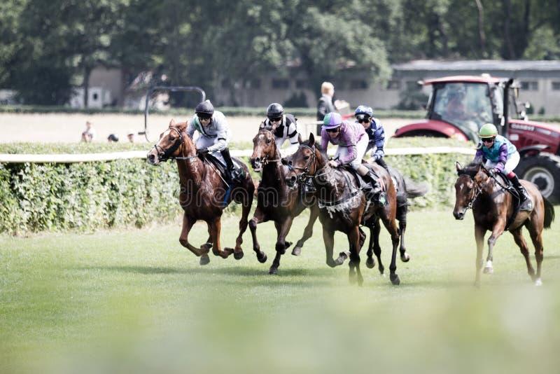 Konie i dżokeje przy wyścigi konny obrazy stock