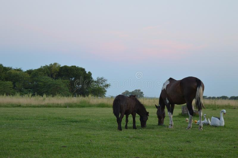 Konie i harmonia fotografia royalty free