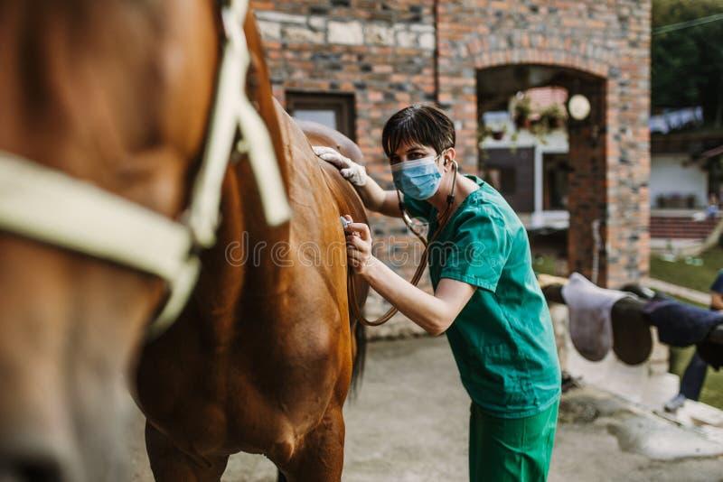 Konie i weterynaryjna praca obrazy royalty free