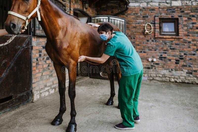 Konie i weterynaryjna praca obraz royalty free