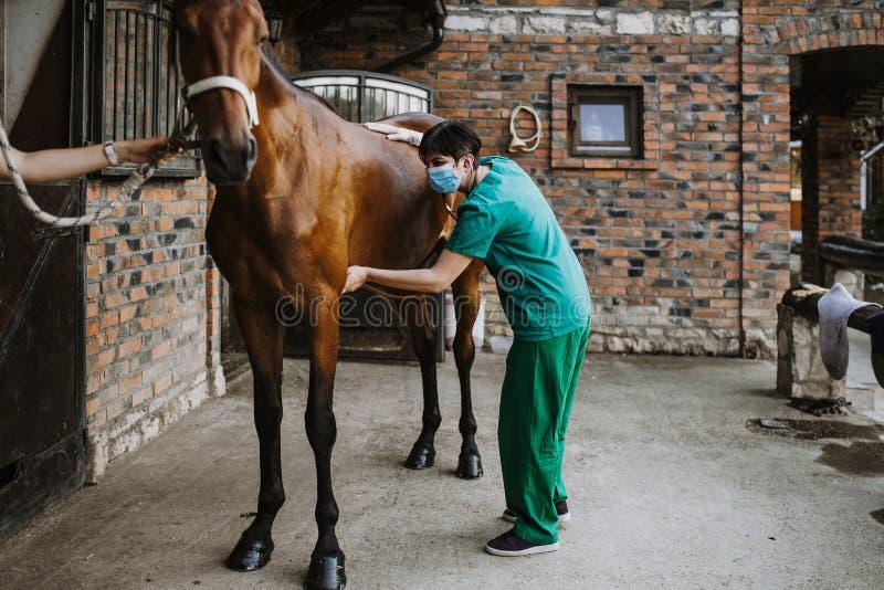 Konie i weterynaryjna praca obrazy stock