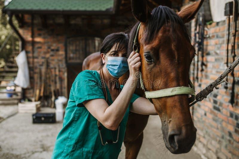 Konie i weterynaryjna praca zdjęcie stock