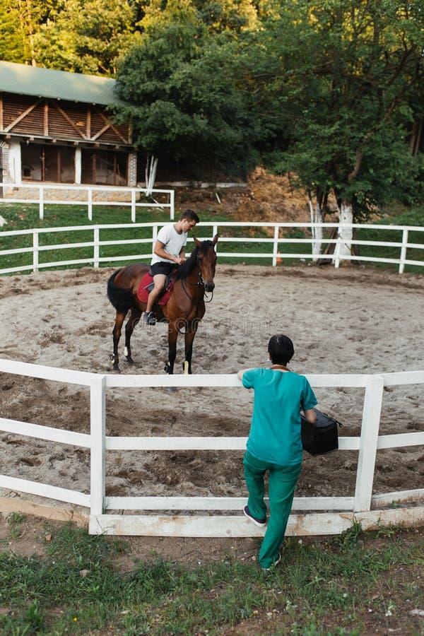 Konie i weterynaryjna praca zdjęcia stock