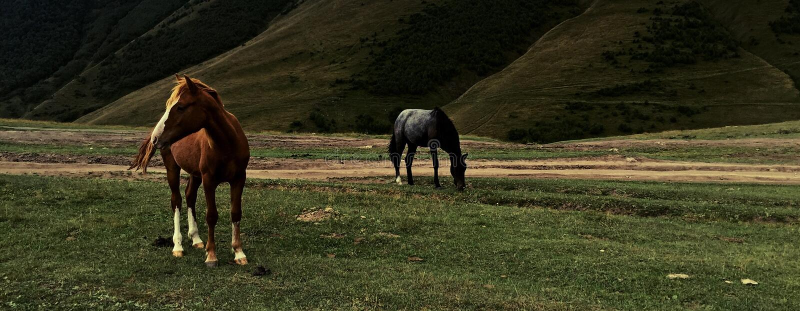 Konie Kazbegi zdjęcie stock