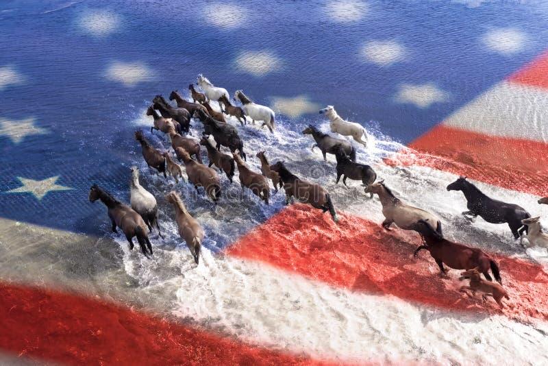 Konie krzyżują rzekę na widok obrazy royalty free