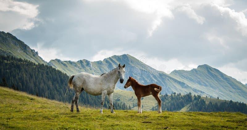 Konie na łące zdjęcia stock
