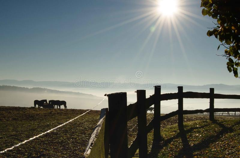 Konie na łące z mgłą zdjęcia stock