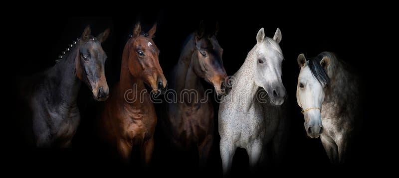 Konie na czerni zdjęcie stock