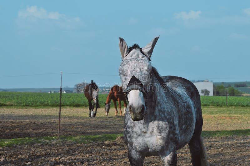 Konie na gospodarstwie rolnym w czechu zdjęcie stock