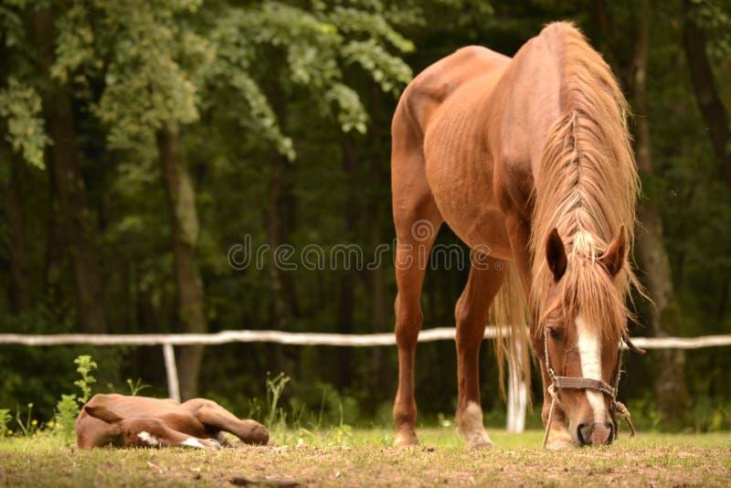 Konie na jardzie zdjęcie royalty free