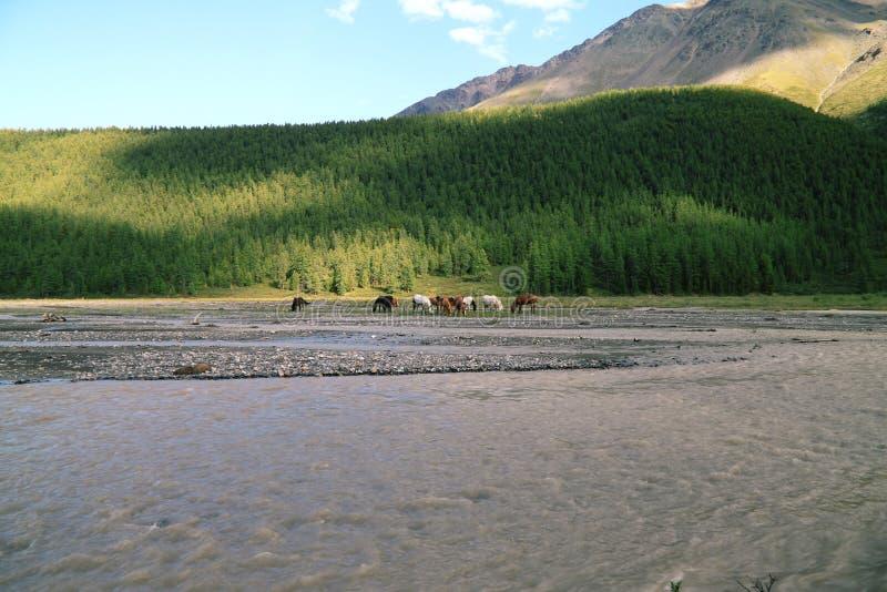 Konie na paśniku w górach zdjęcia royalty free