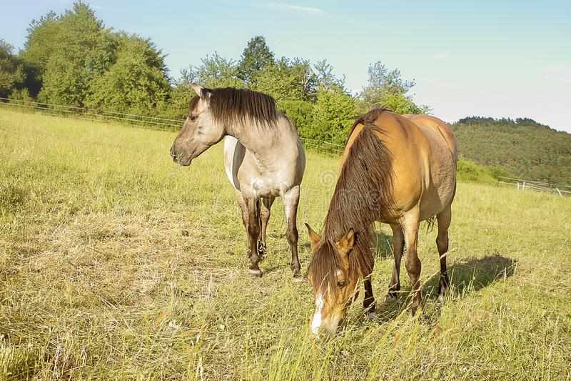 Download Konie na paśniku zdjęcie stock. Obraz złożonej z arousal - 106917280