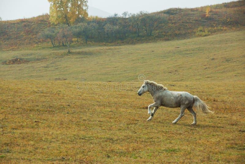 Konie na prerii Wewnętrzny Mongolia, Chiny zdjęcia royalty free