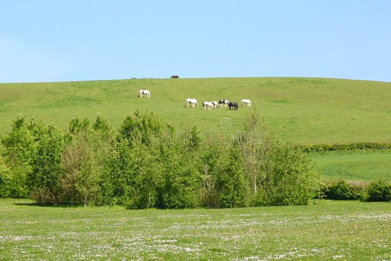 Konie pasa na dystansowym wzgórzu obraz stock