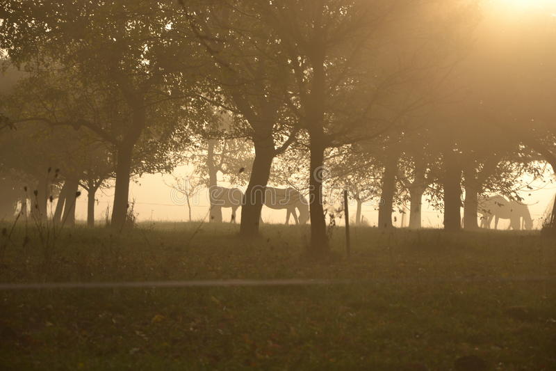 Konie pod drzewami zdjęcia royalty free