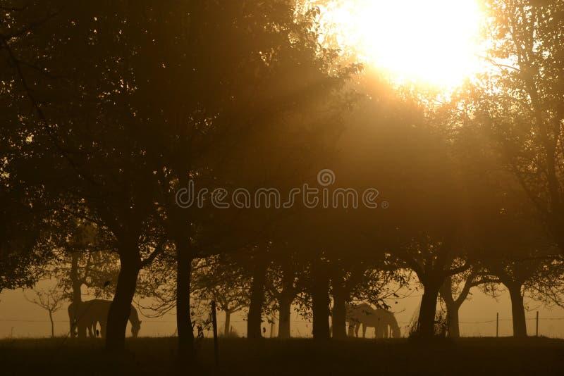Konie pod drzewami obrazy royalty free