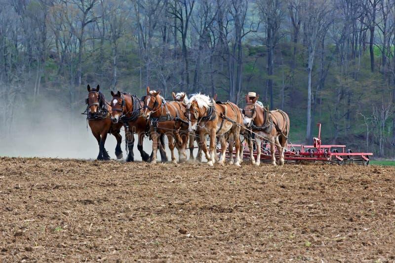 Konie Pracuje na Amish gospodarstwie rolnym obraz royalty free